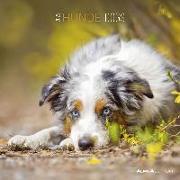 Cover-Bild zu Alpha Edition (Hrsg.): Hunde 2022 - Broschürenkalender 30x30 cm (30x60 geöffnet) - Kalender mit Platz für Notizen - Alpha Edition - Dogs - Bildkalender - Wandplaner