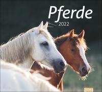 Cover-Bild zu Stuewer, Sabine: times&more Pferde Bildkalender 2022