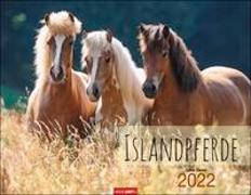 Cover-Bild zu Stuewer, Sabine: Islandpferde Kalender 2022