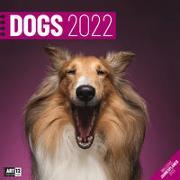 Cover-Bild zu Ackermann Kunstverlag (Hrsg.): Dogs Kalender 2022 - 30x30