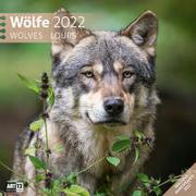 Cover-Bild zu Ackermann Kunstverlag (Hrsg.): Wölfe Kalender 2022 - 30x30