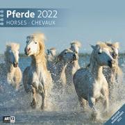 Cover-Bild zu Ackermann Kunstverlag (Hrsg.): Pferde Kalender 2022 - 30x30