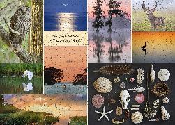 Cover-Bild zu Owens, Delia: Where the Crawdads Sing 1000-Piece Puzzle