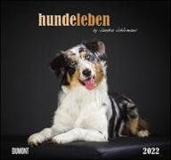 Cover-Bild zu DUMONT Kalender (Hrsg.): Hundeleben 2022 - DUMONT Wandkalender - mit den wichtigsten Feiertagen - Format 38,0 x 35,5 cm