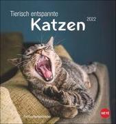 Cover-Bild zu Heye (Hrsg.): Tierisch entspannte Katzen Postkartenkalender 2022