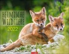 Cover-Bild zu Weingarten (Hrsg.): Heimische Wildtiere Kalender 2022