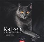 Cover-Bild zu Weingarten (Hrsg.): Katzen - Diven auf Samtpfoten Kalender 2022