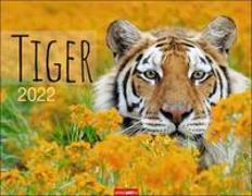 Cover-Bild zu Weingarten (Hrsg.): Tiger Kalender 2022