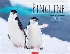 Cover-Bild zu Klein, Jean-Louis: Pinguine Kalender 2022