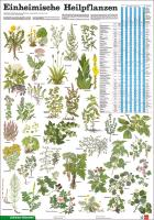Cover-Bild zu Einheimische Heilpflanzen