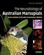 Cover-Bild zu The Neurobiology of Australian Marsupials: Brain Evolution in the Other Mammalian Radiation von Ashwell, Ken (Hrsg.)