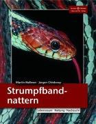 Cover-Bild zu Strumpfbandnattern von Hallmen, Martin