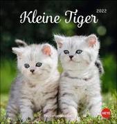 Cover-Bild zu Heye (Hrsg.): Katzen Postkartenkalender Kleine Tiger 2022