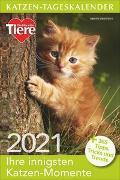 Cover-Bild zu Katzen-Tageskalender 2021