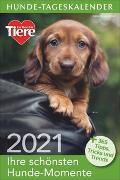 Cover-Bild zu Hunde-Tageskalender 2021