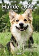 Cover-Bild zu garant Verlag GmbH (Hrsg.): Hunde 2022 Wochenkalender