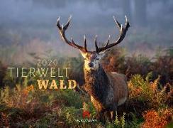 Cover-Bild zu Tierwelt Wald 2020 von Ackermann Kunstverlag (Hrsg.)