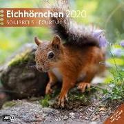 Cover-Bild zu Eichhörnchen 2020 von Ackermann Kunstverlag (Hrsg.)