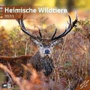 Cover-Bild zu Heimische Wildtiere 2020 von Ackermann Kunstverlag (Hrsg.)