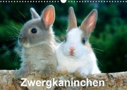 Cover-Bild zu Otmar Diez, Mcphoto: Zwergkaninchen (Wandkalender 2021 DIN A3 quer)