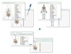 Cover-Bild zu Ich kenne meinen Körper - Organe / Skelett / Verdauung- 3 Tafeln im Set mit Stift von Langhans, Katrin