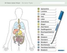 Cover-Bild zu Ich kenne meinen Körper - Die inneren Organe von Langhans, Katrin