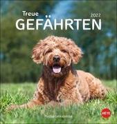 Cover-Bild zu Heye (Hrsg.): Hunde Postkartenkalender - Treue Gefährten 2022