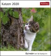 Cover-Bild zu Katzen Kalender 2020