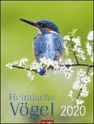 Cover-Bild zu Heimische Vögel Kalender 2020