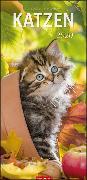 Cover-Bild zu Katzen Vertical Kalender 2020