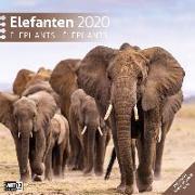 Cover-Bild zu Elefanten 2020