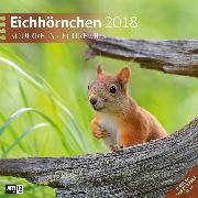 Cover-Bild zu Eichhörnchen 2020