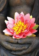 Cover-Bild zu Buddha-Karte: Lotus von Zintenz