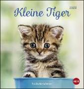 Cover-Bild zu Katzen Postkartenkalender Kleine Tiger Kalender 2020