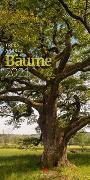 Cover-Bild zu Bäume Kalender 2021 von Ackermann Kunstverlag (Hrsg.)