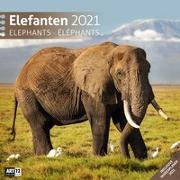 Cover-Bild zu Elefanten Kalender 2021 - 30x30 von Ackermann Kunstverlag (Hrsg.)