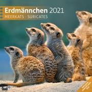 Cover-Bild zu Erdmännchen Kalender 2021 - 30x30 von Ackermann Kunstverlag (Hrsg.)
