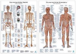 Cover-Bild zu Doppelpack Anatomie-Poster