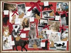 Cover-Bild zu Katzen - Freunde auf Samtpfoten