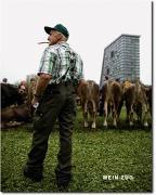 Cover-Bild zu Heimgartner, Thomas: Mein Zug