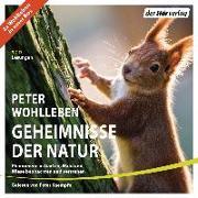 Cover-Bild zu Geheimnisse der Natur von Wohlleben, Peter