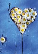 Cover-Bild zu Eschbacher Textkarte. Gänseblümchen