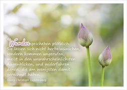 Cover-Bild zu Wunder geschehen plötzlich. Sie lassen sich nicht herbeiwünschen ... Georg Christoph Lichtenberg