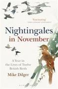 Cover-Bild zu Nightingales in November von Dilger, Mike