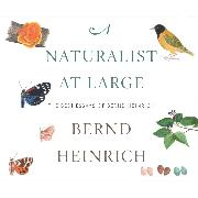 Cover-Bild zu A Naturalist at Large - The Best Essays of Bernd Heinrich (Unabridged) (Audio Download) von Heinrich, Bernd