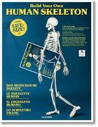 Cover-Bild zu Build Your Own Human Skeleton - Life Size!