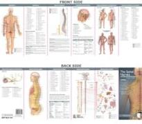 Cover-Bild zu Anatomical Chart Company's Illustrated Pocket Anatomy: The Spinal Nerves & the Autonomic Nervous System Study Guide