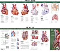 Cover-Bild zu Anatomical Chart Company's Illustrated Pocket Anatomy: Anatomy of the Heart Study Guide