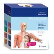 Cover-Bild zu Schünke, Michael: PROMETHEUS LernKarten der Anatomie