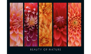 Ravensburger Puzzle. Beauty of Nature